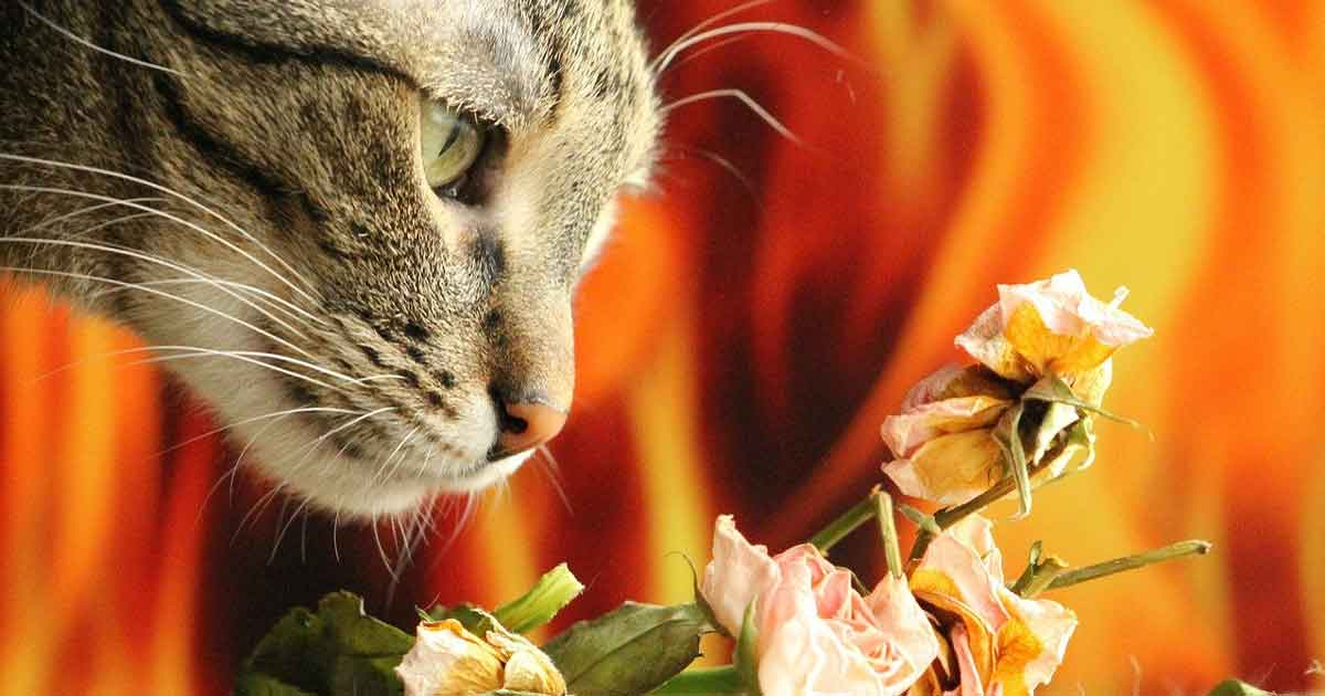 cat smelling roses